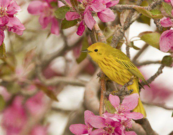 Angry Birders